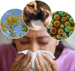 Fact of allergies